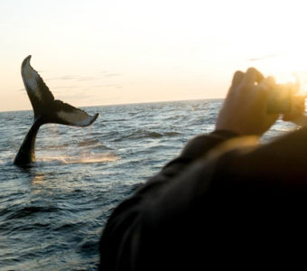 Digby Neck is the base for whale-watching tours between mid-June and early October. Go to the Good Stops page for information on tour operators and distances. http://wildflowercottagens.com/good-stops